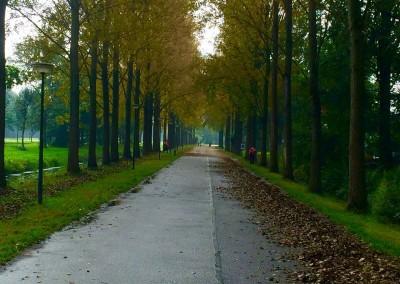 Herfst in Leusden, bladruimen