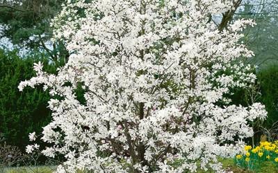 16 maart a.s. is het zover, Nationale Boomplantdag.