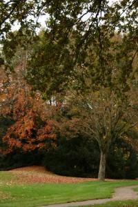 Herfst in Leusden