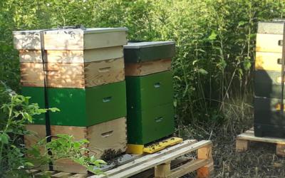 Bijenkasten geplaatst aan de Maanweg